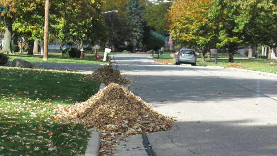Leaves piled up in the street gutter.